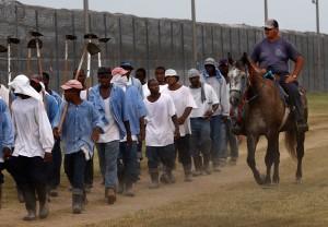 Prison Horses